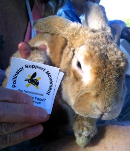 Shown: PSM's Ban Neonicotinoids sticker and bunny rabbit Hippity Hop © 2012 Pollinator Support Movement