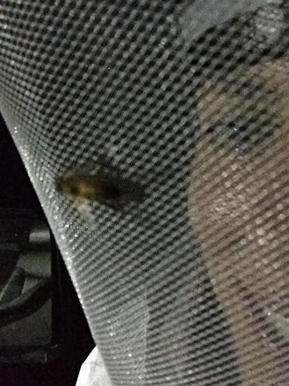 Alisha Bee with Bee